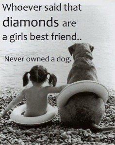 Dog Vs Diamonds