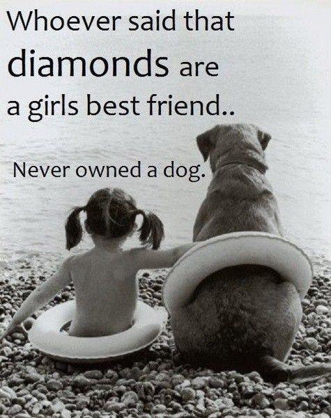 Dog Vs Diamonds