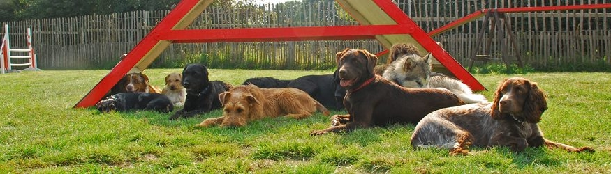 doggie day care halo dogs
