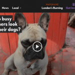 London live halo dogs