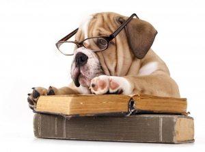 dog daycare london - book a visit.