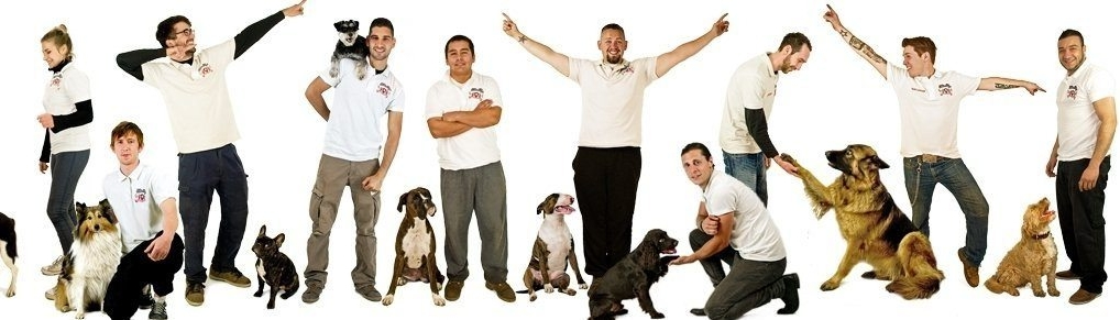 dog trainer london