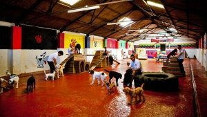 Dog Day Care Centre
