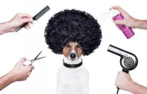 Dog Grooming North London
